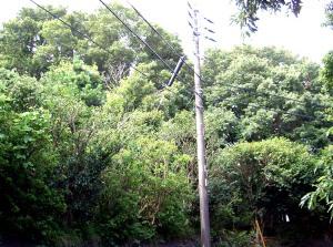 20048